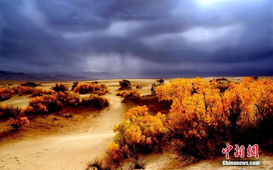 中国海拔最高的盆地_世界海拔最高的胡杨林迎来最美观赏期-大河网