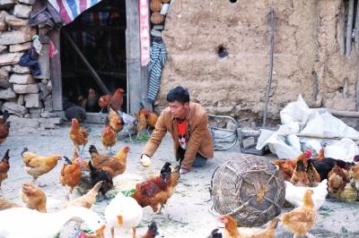 疾患小伙26年无法站立 靠双手养鸡赚钱撑起一个家