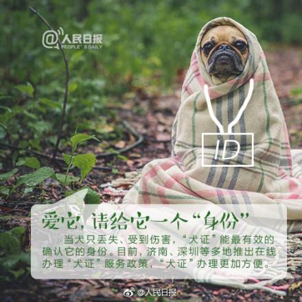 狗患还是人患?杭州规定遛狗时间是怎么回事?背后原因及详情始末惊呆你我