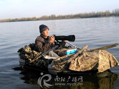 """鸟中大熊猫""""中华秋沙鸭""""现身南阳白河"""