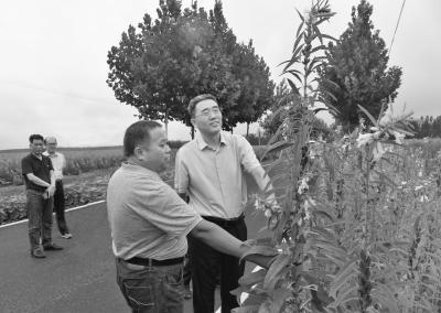 平舆 农村有看点 农业大发展