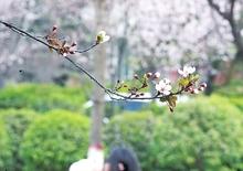 绿染校园花绘春天
