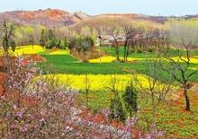 初春的色彩装扮了田野