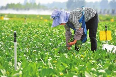 拓展农业产业优势培育乡村振兴新动能