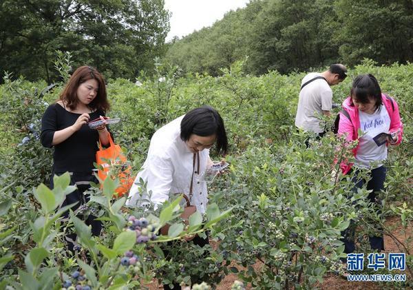 河南鲁山:搭乘电商扶贫快车 催动乡村特色产业发展