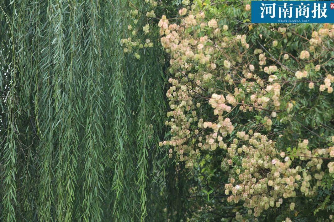 /zhengzhou/138615.html