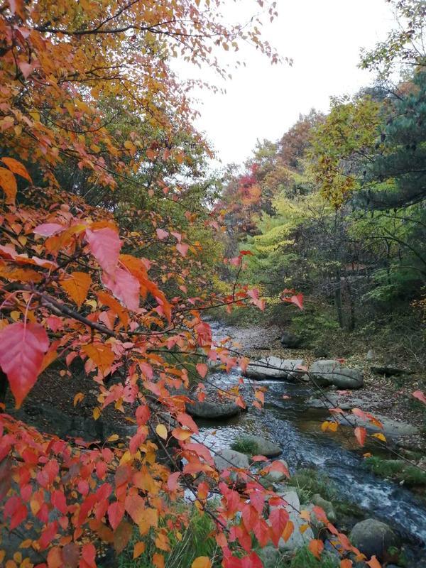首批國家森林康養基地開始公示 河南這三個地方入選