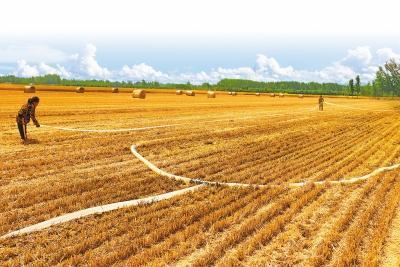 """小麦跟着专家看麦收丨""""田保姆""""的61个 """"麦宝贝""""熟了"""