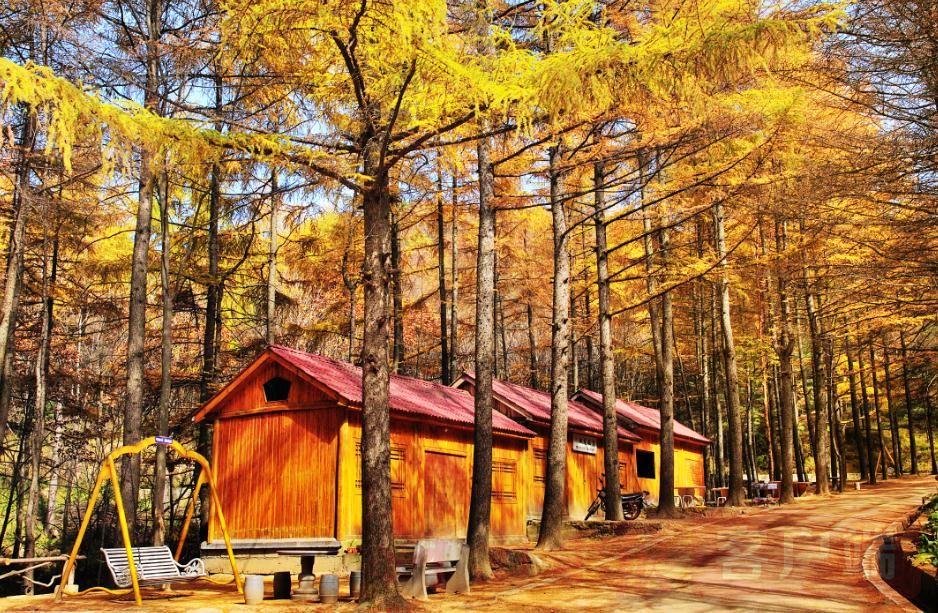 """森林康養迎來""""風口""""!三年內河南將建145個森林養老基地"""